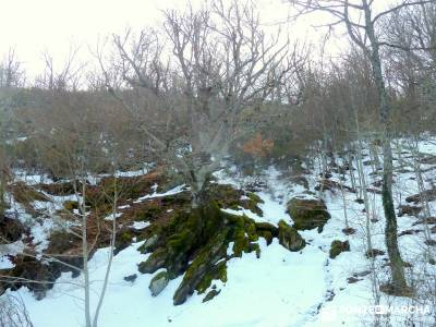 Hayedo Montejo; Reserva Biosfera Sierra Rincón; grupos de senderismo; grupo senderismo